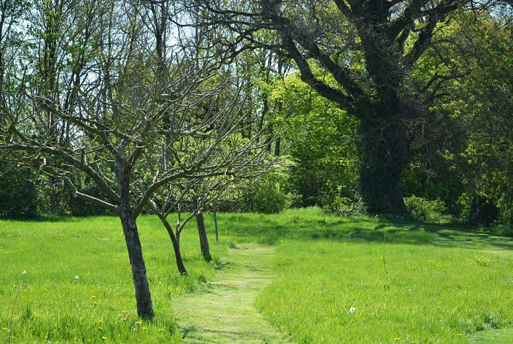Allée de fruitiers devant le chêne