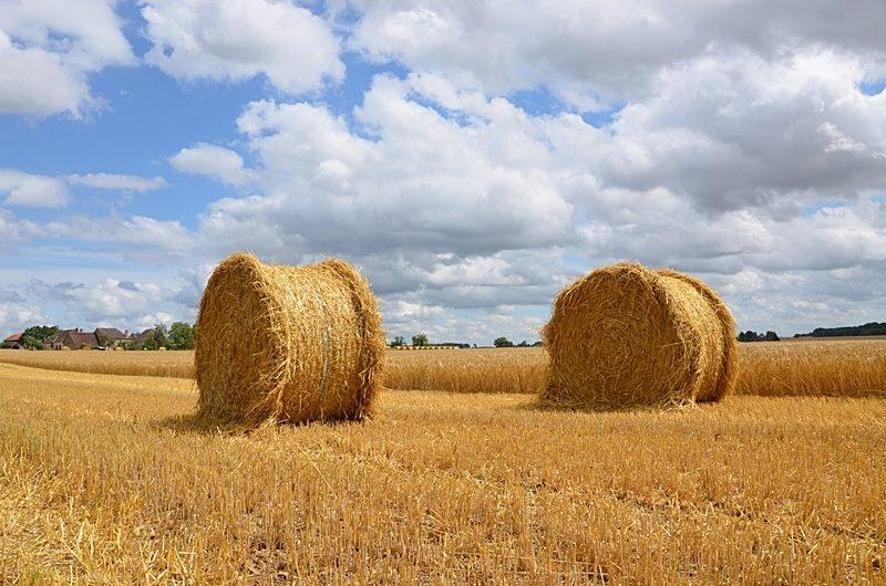 Après la moisson des champs dorées et de belles bottes de paille sous un ciel changeant