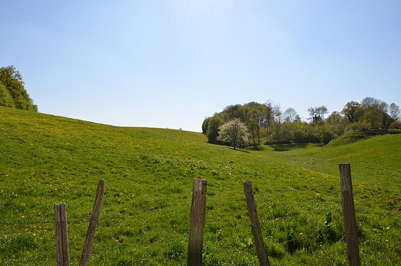 Une belle prairie printanière près d'un petit village de l'Yonne Sommecaise