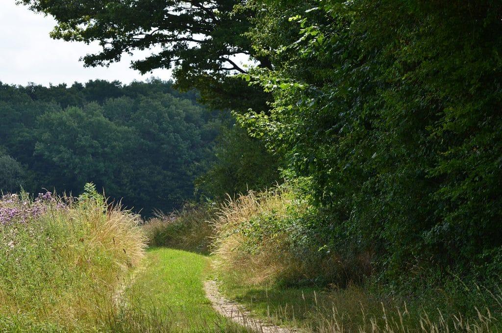 A partir du jardin chemin partant vers la campagne
