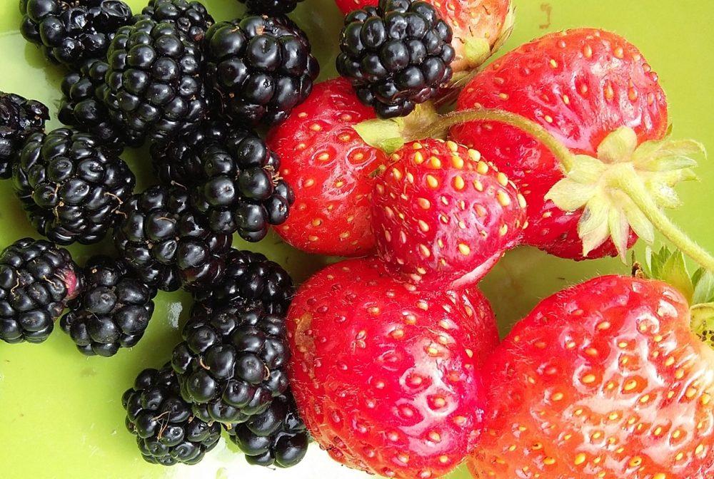 fraises et mûres pour une dégustation sans pesticides