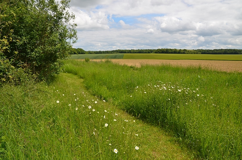 chemin herbe et fleurs sauvages